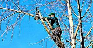 How to Cut Branches from a Tall Tree